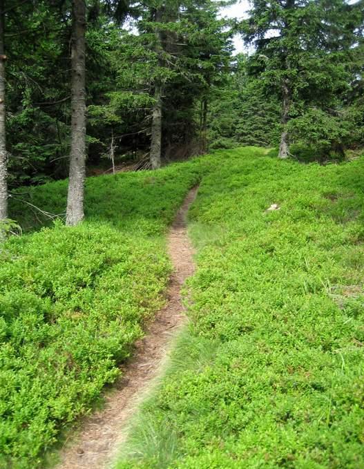 Pot Grmovškov dom - Ribniška koča z rastišči borovnic